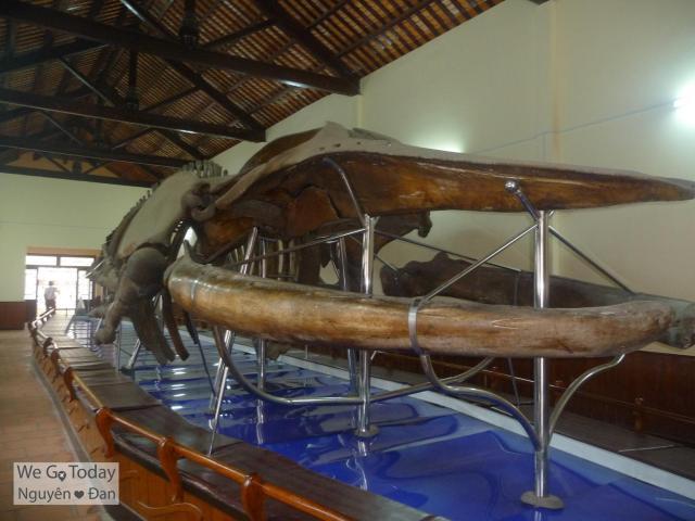 Bộ xương Ông Nam Hải (dài 22m)