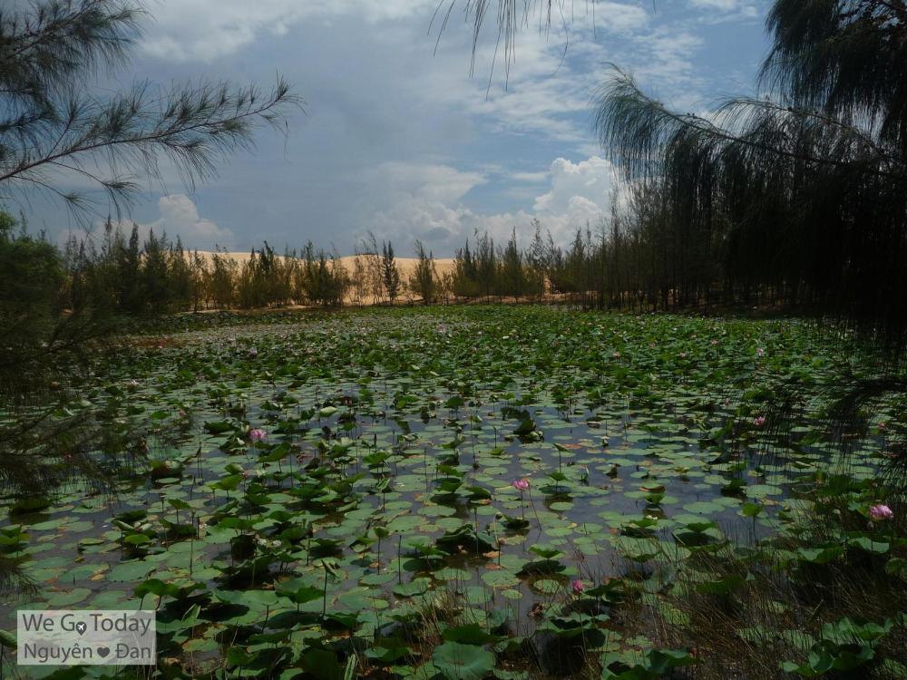 Hồ sen tại Bàu Trắng
