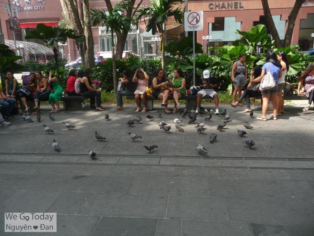 Chim bồ câu