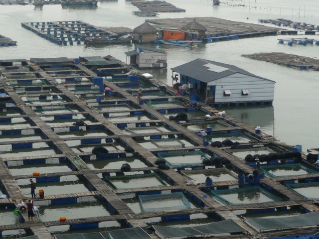 Bè hải sản nhìn từ cầu Chà Và