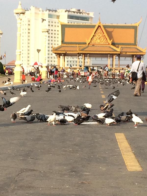Chim bồ câu Royal Palace Park