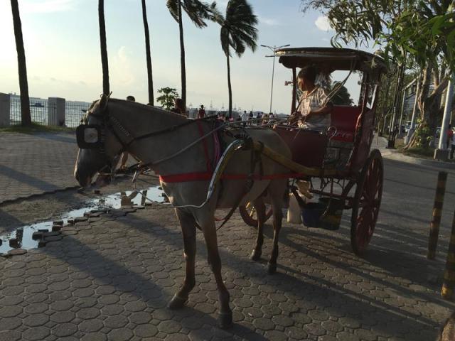 Xe ngựa
