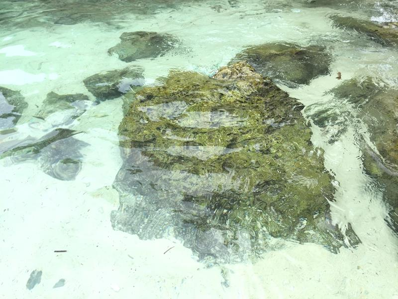 Biển Ili-iligan