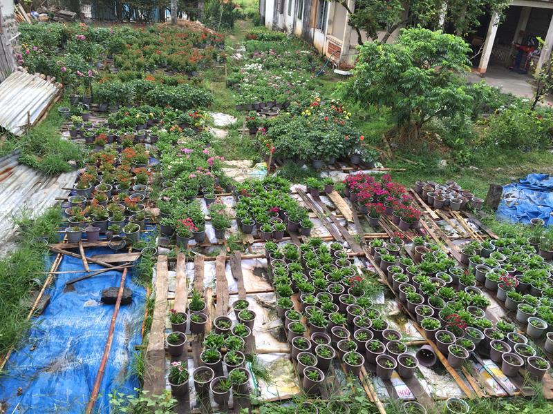 Vườn hoa Dung
