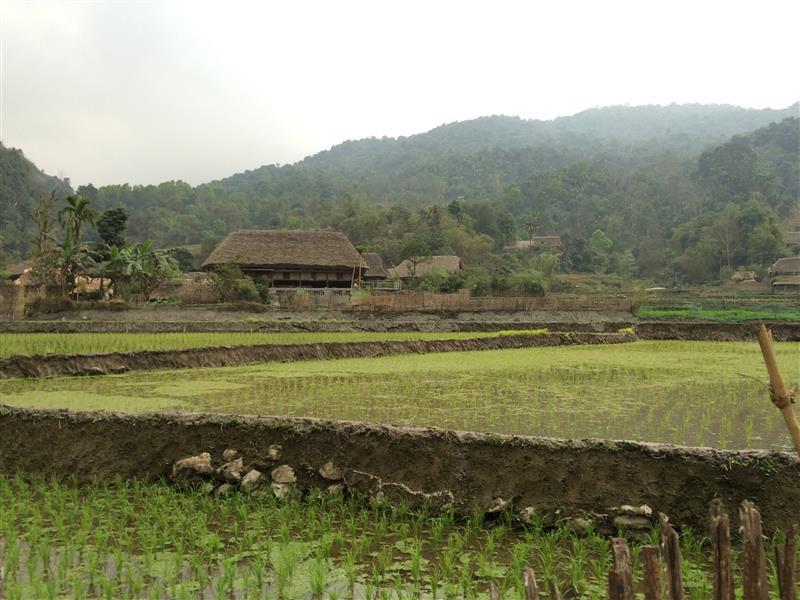 Đồng lúa - Làng Văn Hóa Du Lịch Cộng Đồng Thôn THA