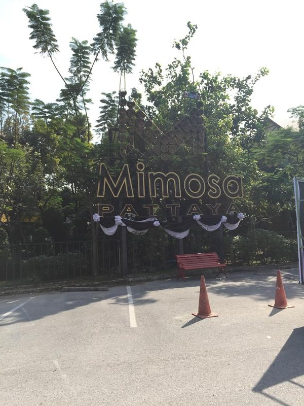 Mimosa - City of Love