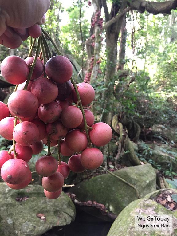 Trái dâu rừng