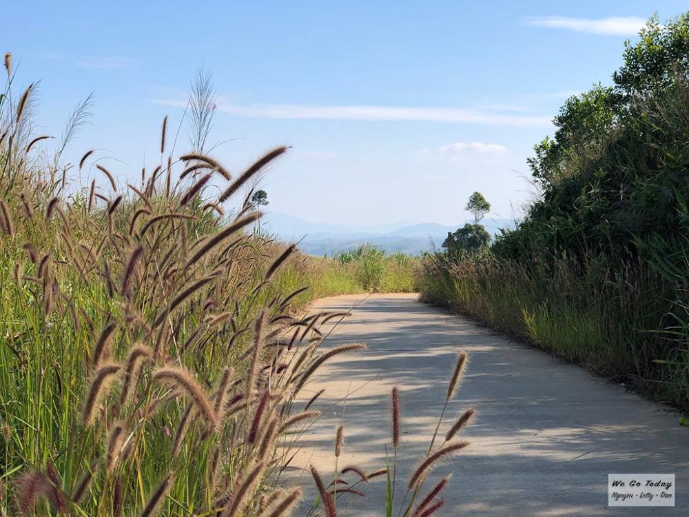Đường đi ra Ngã ba Đông Dương có nhiều cỏ hồng